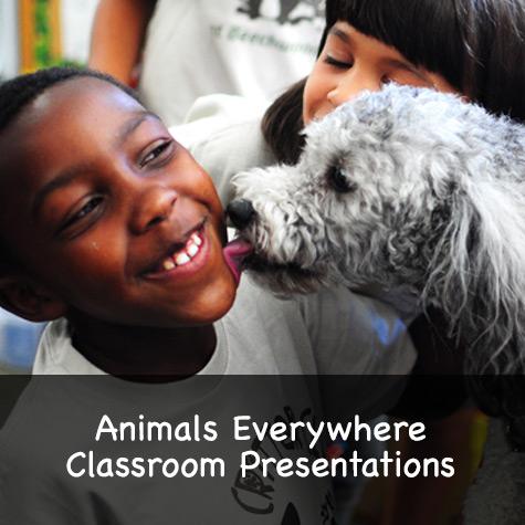 Animals Everywhere Classroom Presentations