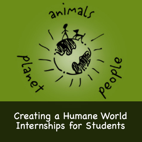 Internships for Students