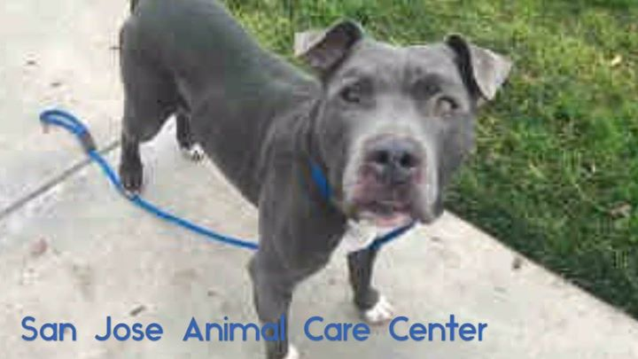 Please intervene! Help Lance get out of the shelter in time!? Urgent