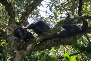 Grooming and hanging out in the trees.