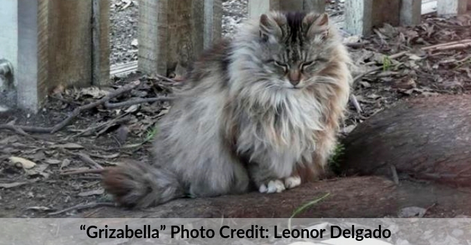 Grizabella the cat