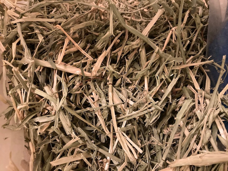 oat hay