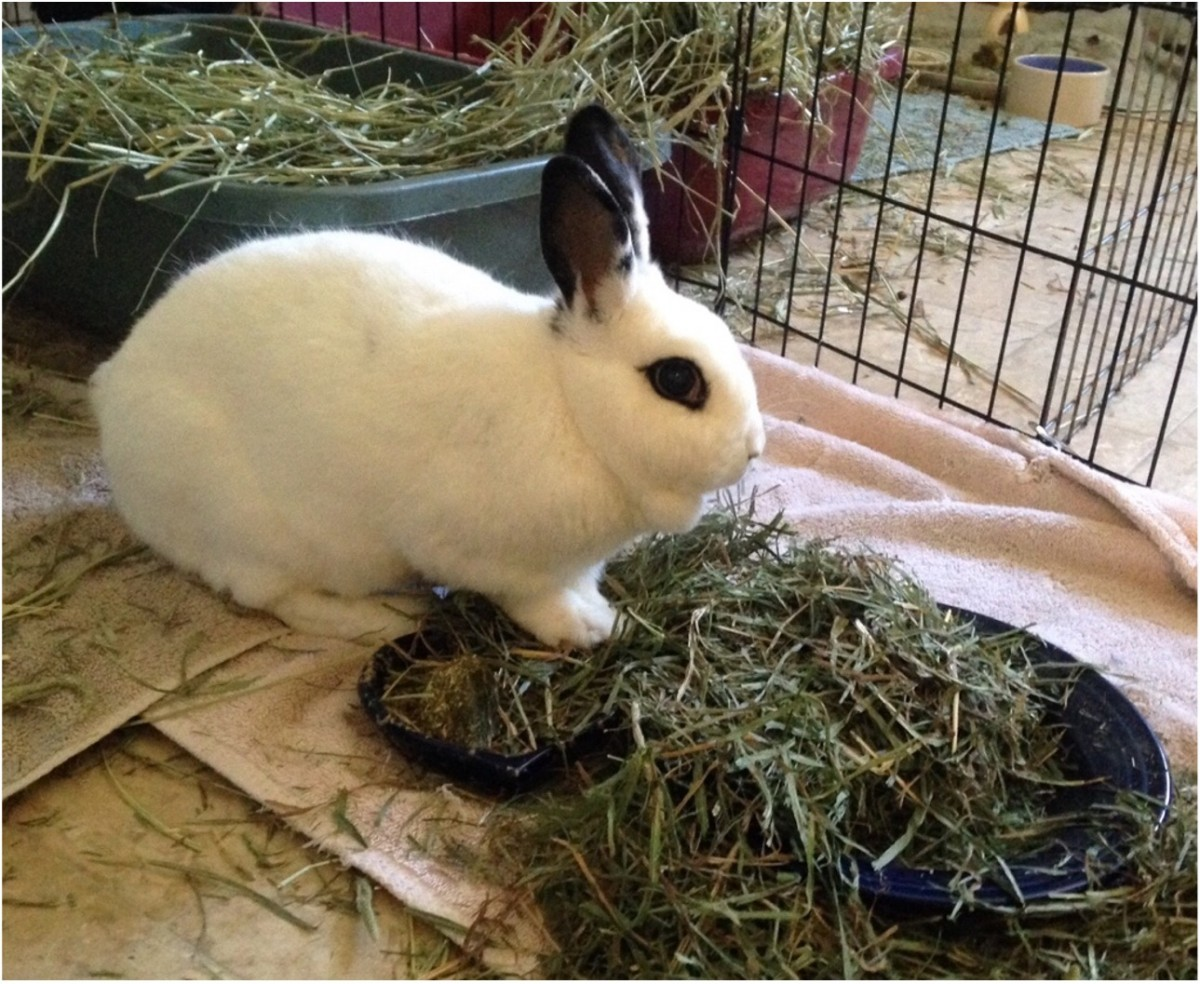 Pippin enjoying a pile of timothy hay